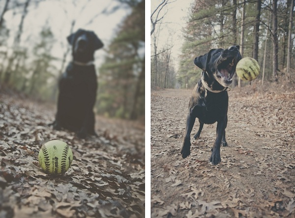 © StudioFido | Black-lab-playing-fetch