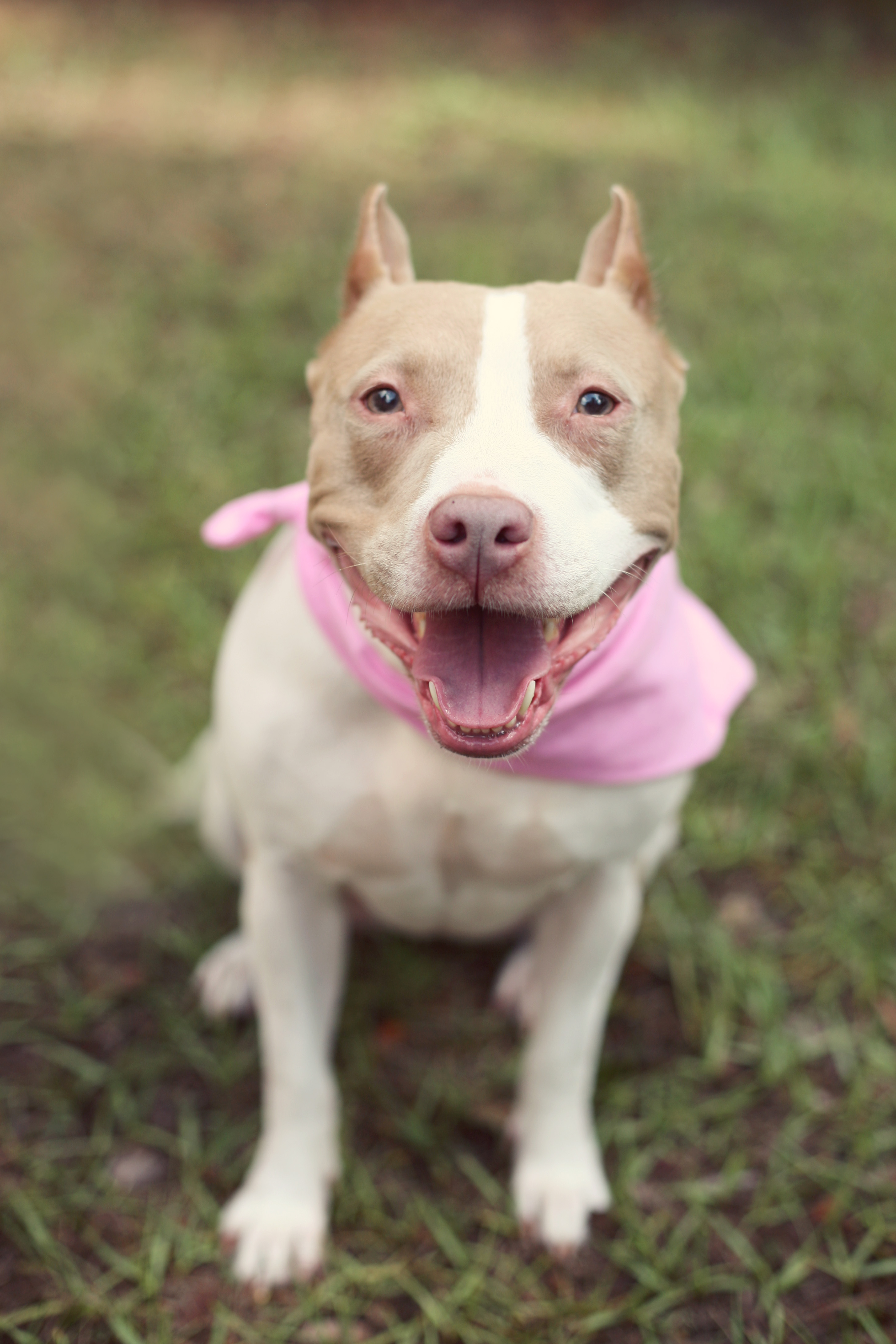 pretty-in-pink-pitty