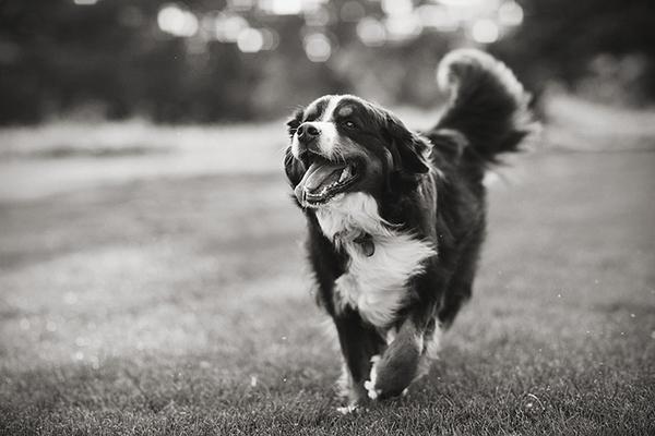 Live-Love-Fetch