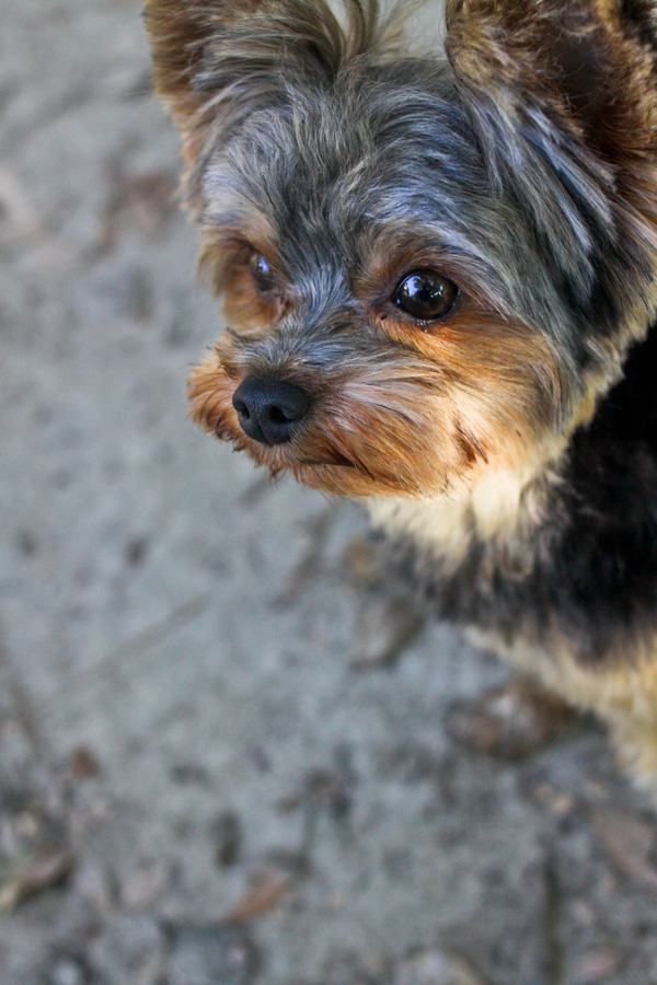 Happy Tails:  Ty