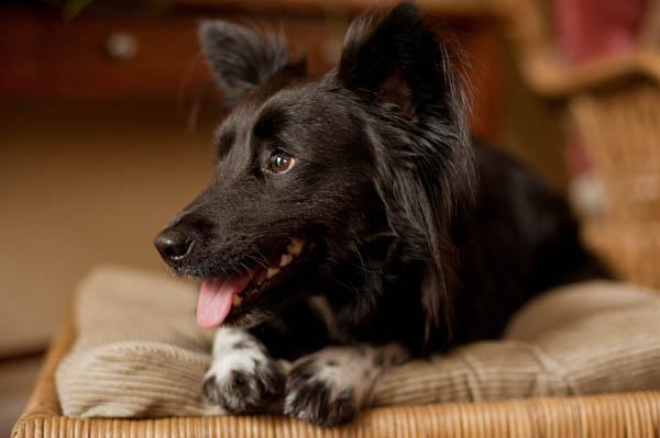 Lost-Dog-&-Cat-Foundation-alumni, Virginia-dog-portraits