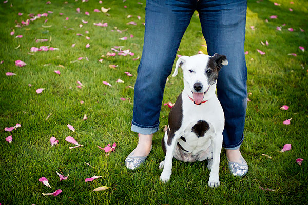 senior-spotted-staffy-and-woman