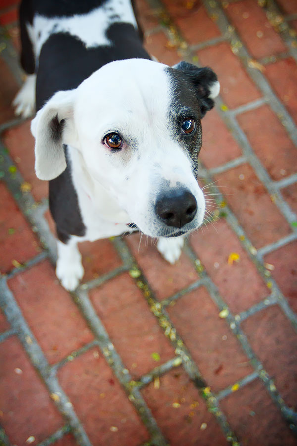 sweet-staffy-mix-on-brick-patio