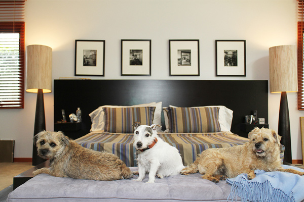 © Bethany Nauert Photography, dogs-on-furniture