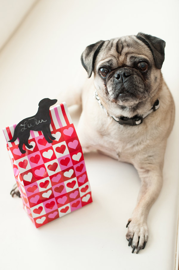 DIY-Vegan-Dog-Treats-Valentines-Day, Pug-on-white-couch