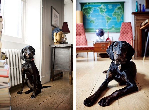 beautiful-mixed-breed-looking-for-home,  NYC-dog-portrait