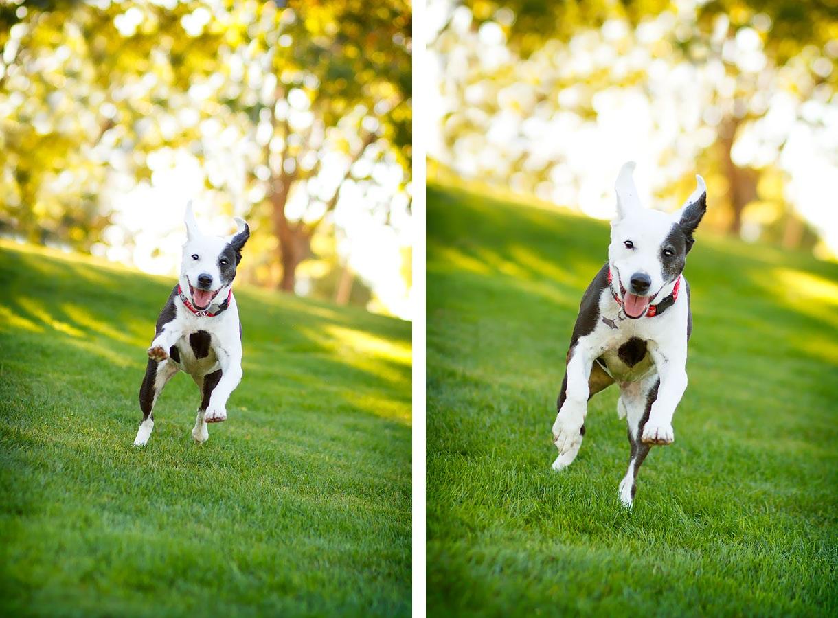 senior-dog-acting-like-a-puppy