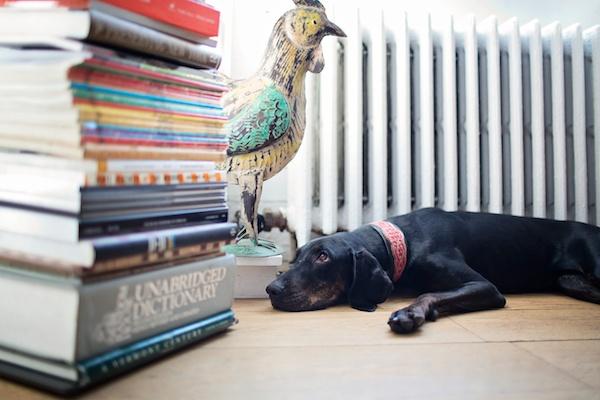 NYC-apartment-dog