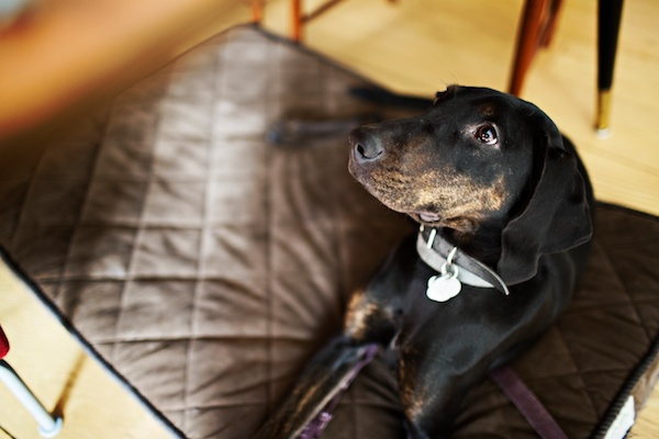 beautiful-mixed-breed-looking-for-home, sweet-adoptable-dog, NYC-dog-portraits