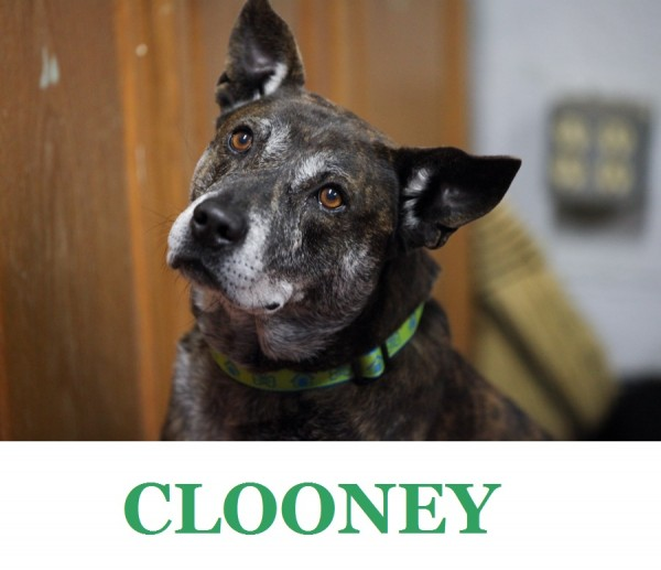 Adopt Clooney! Available from Humane Society of Eastern Carolina