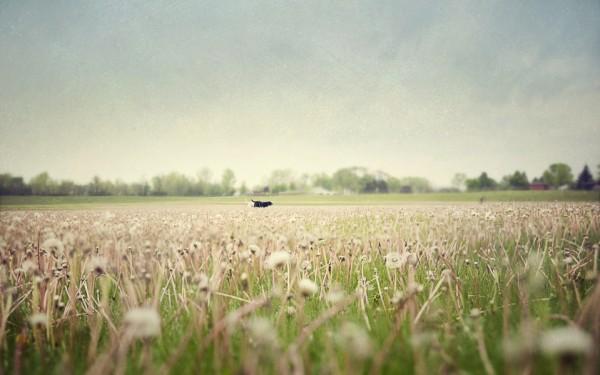 field-with-dog, Michigan-pet-portraits