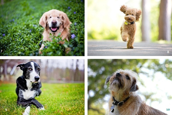 canine-good-citizen-nominees. therapy-dogs, service-dogs