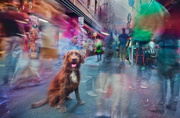 Melbourne-pet-photography