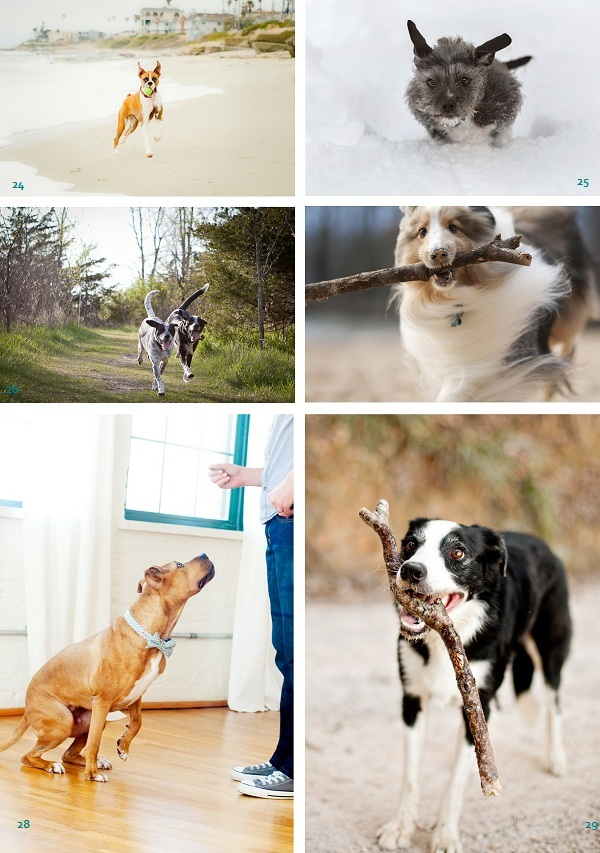 Best-Stuntdog-Nominees, active-dogs, dogs-fetching, running-dogs