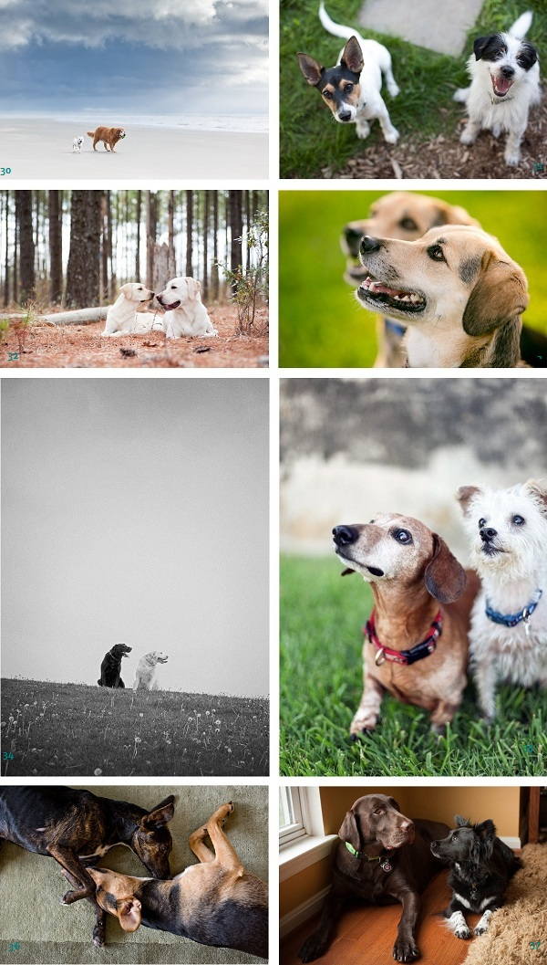 Dynamic-duo-nominees, dog-bffs,- best-friends, canine-buddies