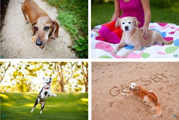 Golden-Oldies-Nominees, dachshund, pitty-mix, rescue-dog, Golden-Retriever