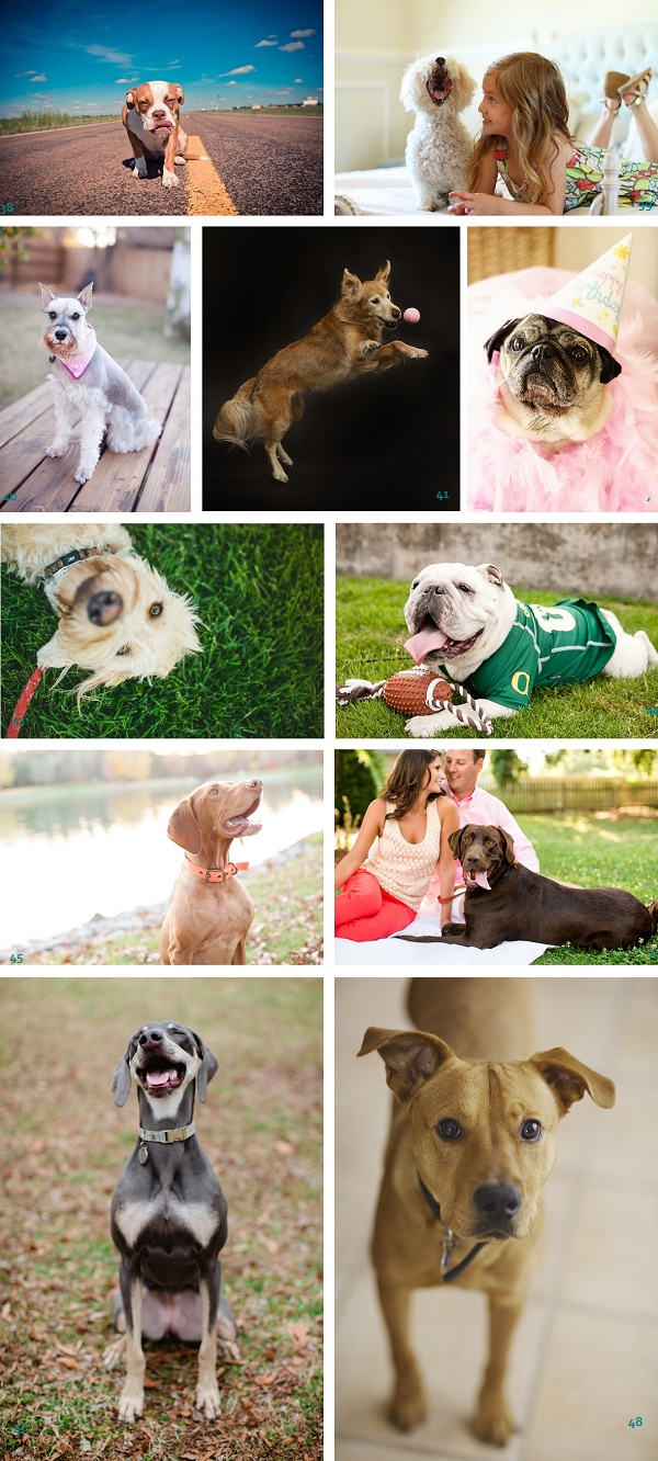 Scenestealer-nominees, funny-dogs, goofy-dogs, dressed-up-dogs