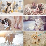 Most-adorable-puppies