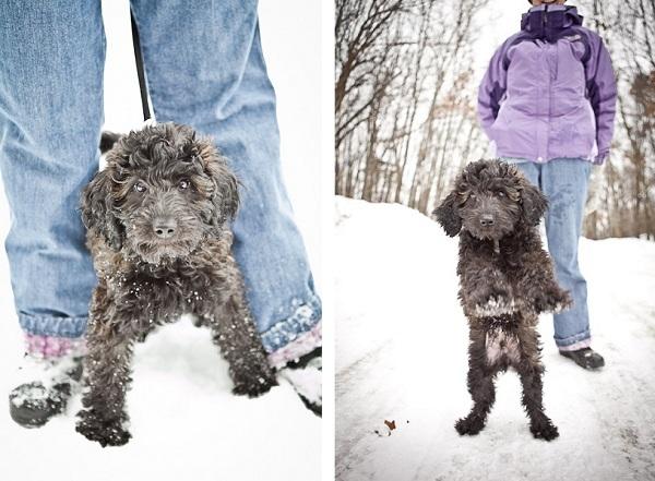 puppy-in-snow