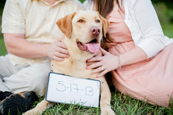 Save-the-date-session-with-dog, Yellow-Lab-save-the-date-photo