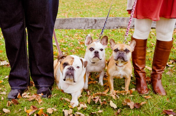 Ohio-engagement-session-with-bulldogs