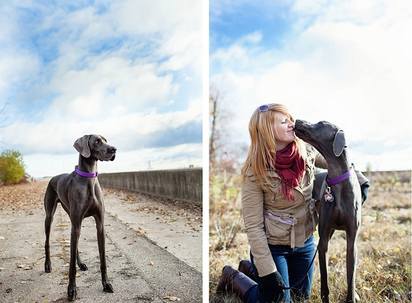 Great-Dane-at-the-beach, Weimaraner-mix-, girl-and-her-dog