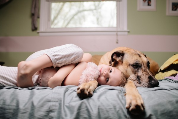 little-girl-Great-Dane-on-bed, a-girl-and-her-dog