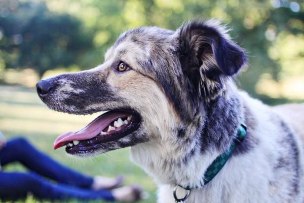 mixed-breed-found-in-ditch, Parvo-survivor