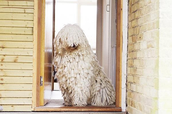 © Amber Allen, London-Pet-Photographer, Crufts-Photographer