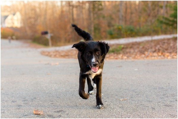 dog-photography, rescued-border-collie