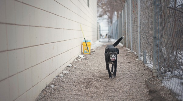 senior-rescue-dog, dog-portraits, HeARTspeak-volunteers
