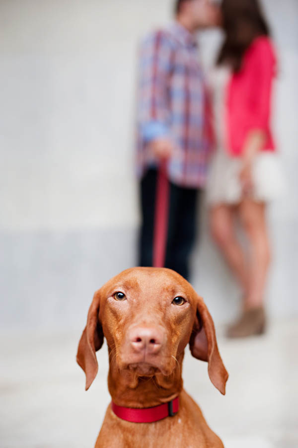 Vizla-Philly-pet-and-engagement-photographer
