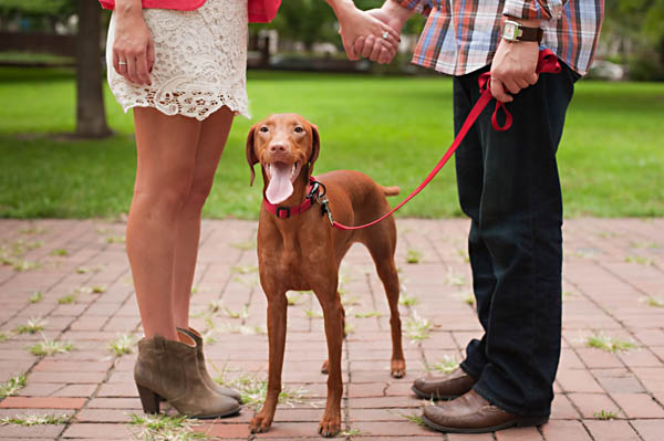Syracuse-pet-photographer, Vizsla