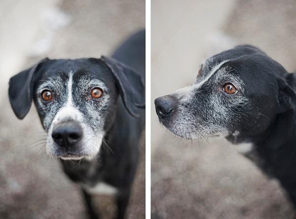 adoptable-dog. senior-dog, animal-shelter-photos