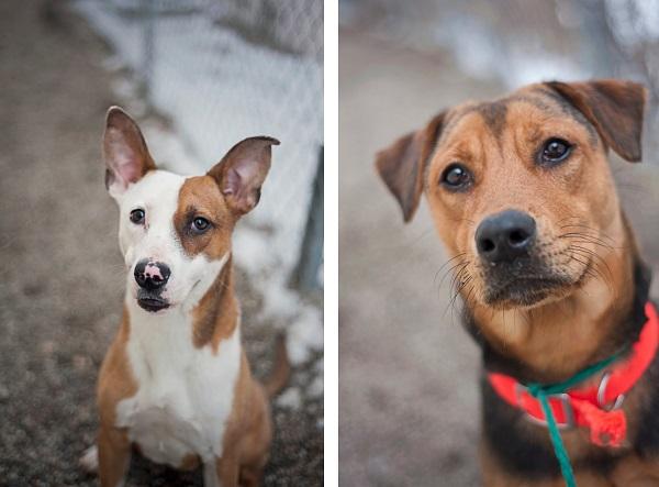 homeless-dogs, SCAAC, Heartspeak-works