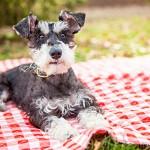 picnic-dog