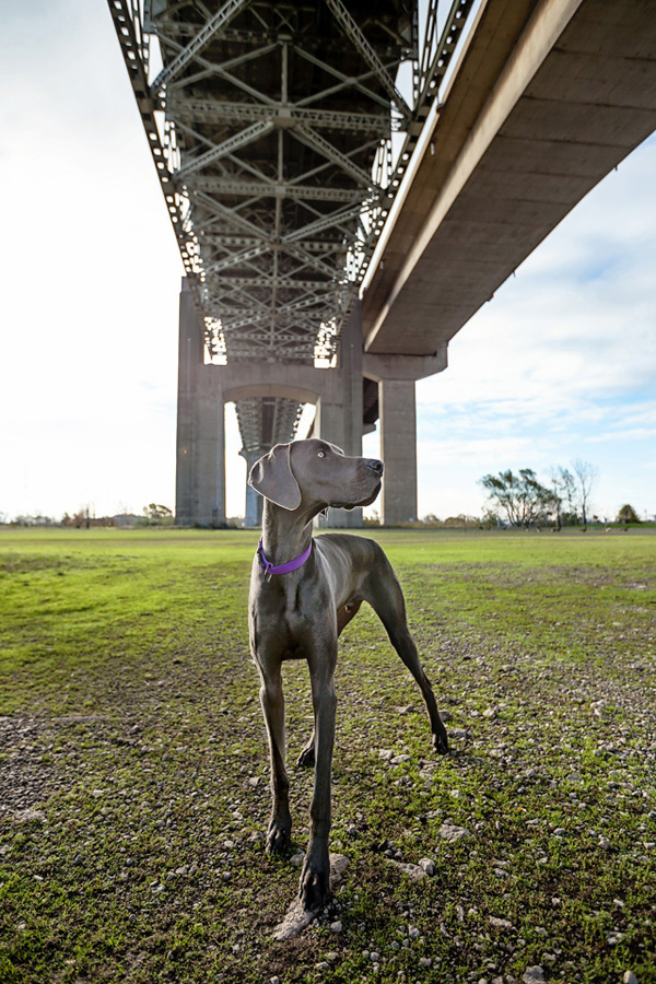 goat-under-bridge, modern-dog-photography, Ontario-Pet-Photographer