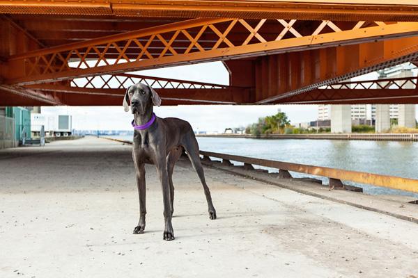 goat-under-bridge, dog-and-bridge, urban-dog-photography