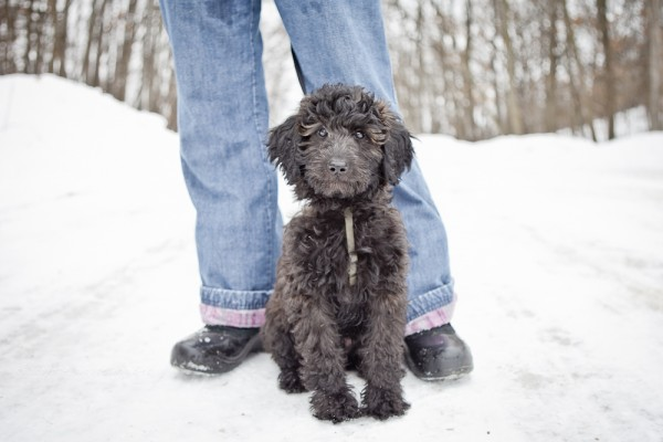 Mixed-breed-puppy-in-snow