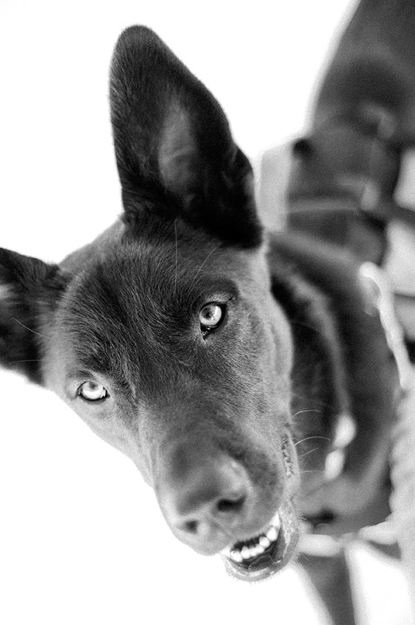 Donner-Pass-Pet-photography. SF-pet-photographers