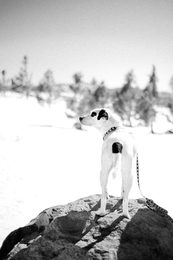 Donners-Pass-dog-portrait