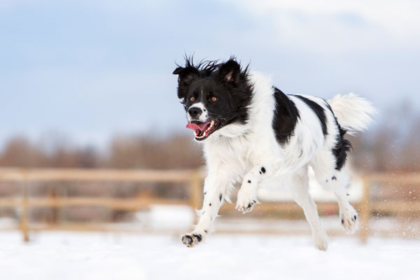 dog-in-motion, pet-photography