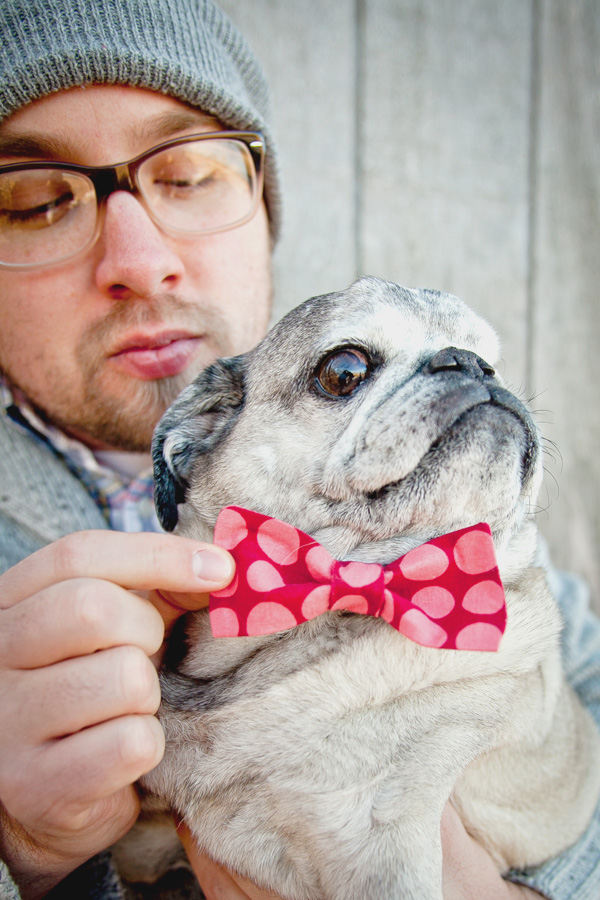 senior-Pug-wearing-bowtie