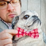 handsome-senior-pug-in-bowtie