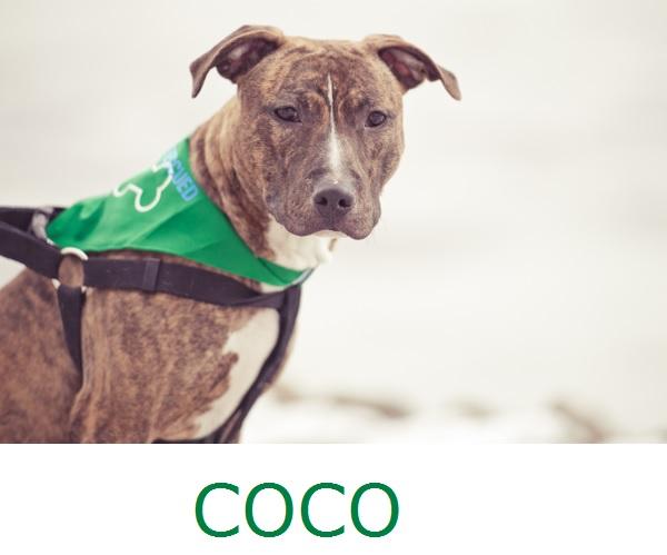 Adopt-Coco! Pit-City-Rescue