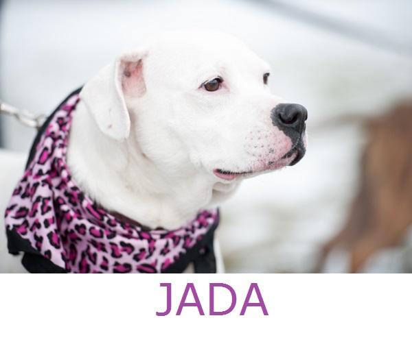 Adopt-Jada! Pit-City-Rescue, CNY
