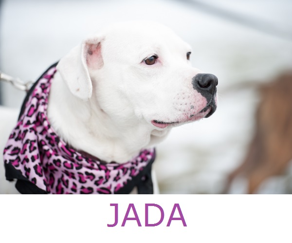 Adopt-Jada! Pit-City-Rescue, Inc.