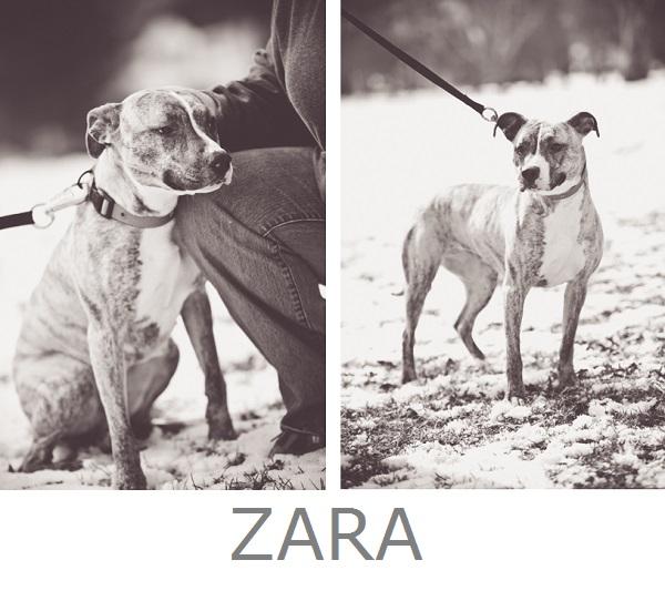 Adopt-Zara! Pit-City-Rescue, CNY