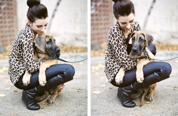 Great-Dane-Puppy, Audrey-Hepburn-lookalike