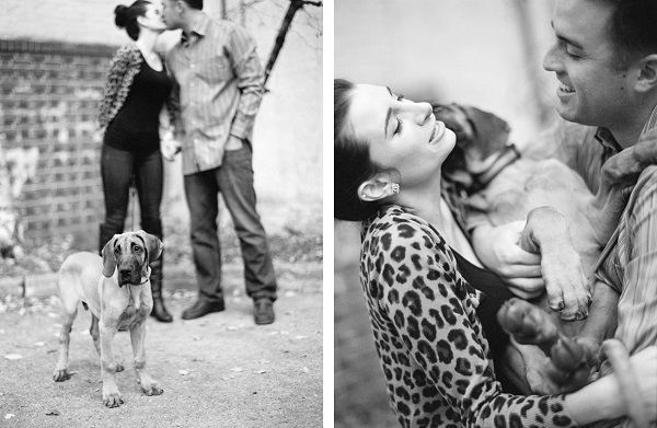 day-after-wedding-photo-session-with-Great-Dane-puppy